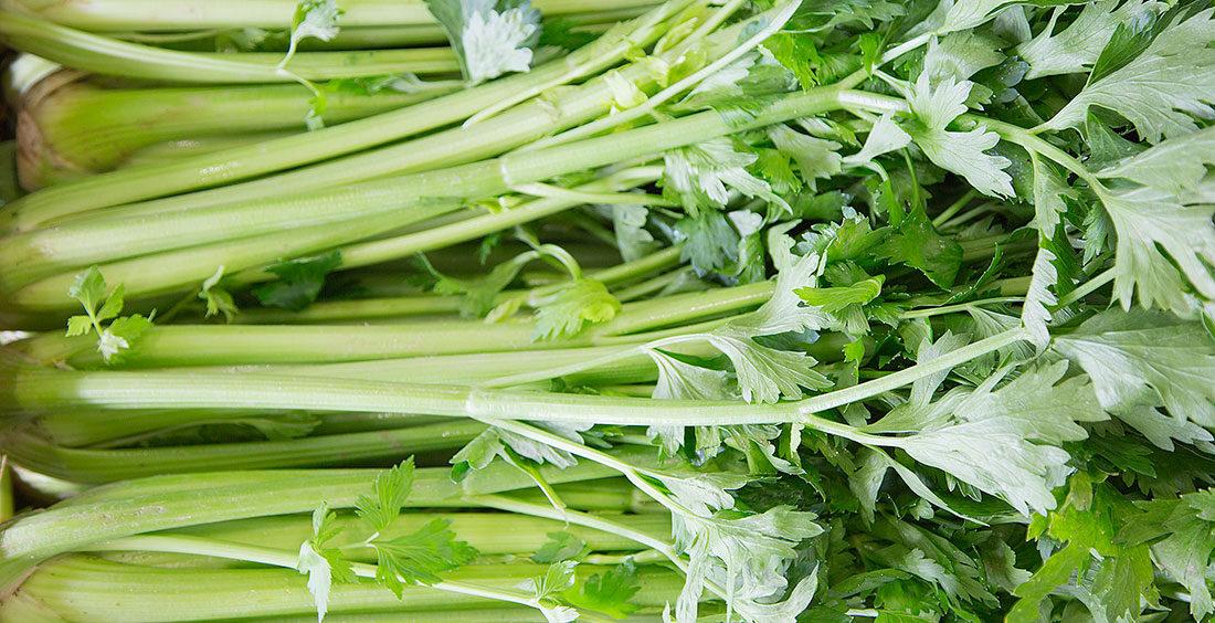 ¿Qué son las hortalizas?