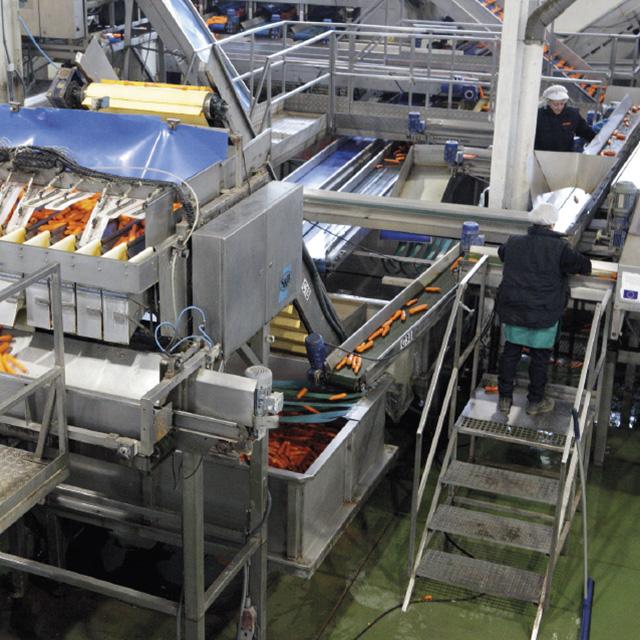Producción y venta de verduras y hortalizas