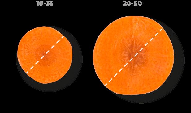 Calibre de zanahorias Zanemi - Producción y venta de hortalizas y verduras