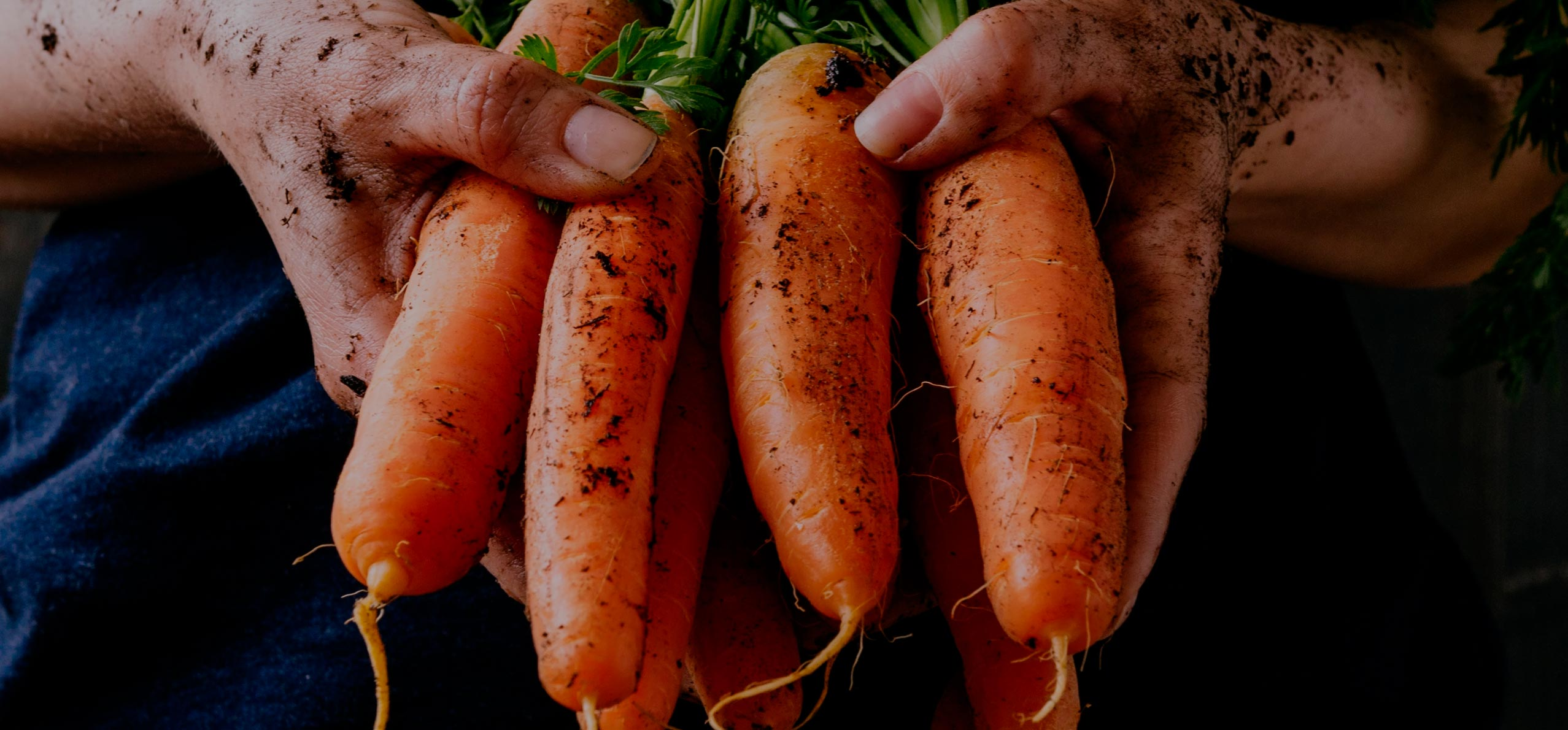 Zanahorias que saben a zanahoria