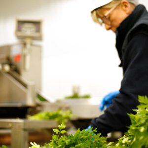 Producción y venta de hortalizas y verduras