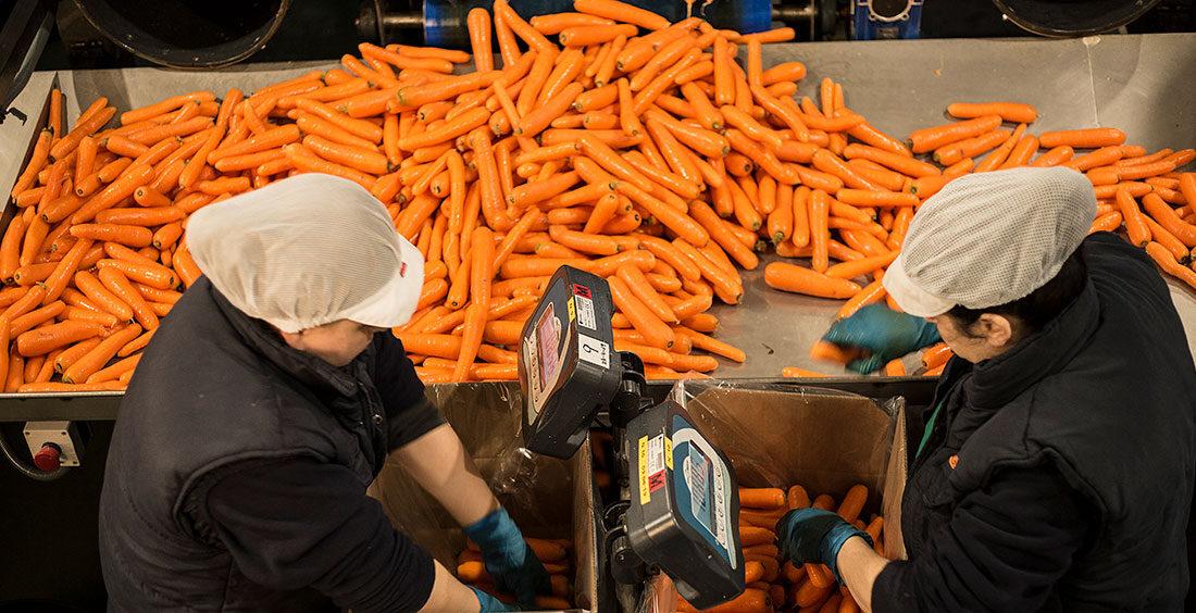 Control de calidad de las zanahorias Zanemi